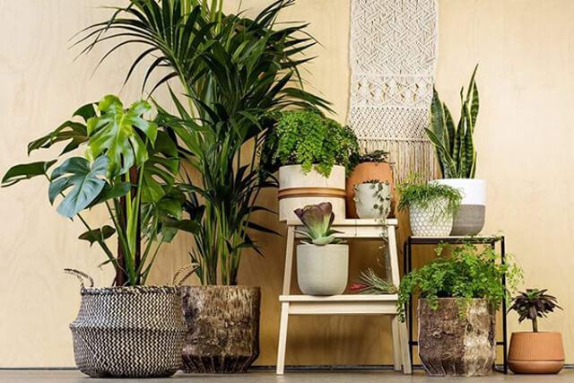 Trồng cây xanh trong nhà